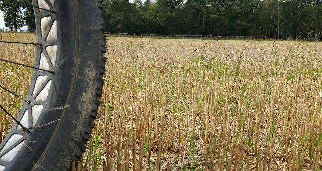 Zboże, kukurydza czy ściernisko fat łyka wszystko